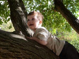 Kijufa Baum Ferien